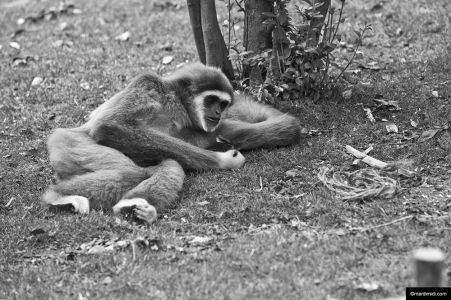 Gloomy monkey