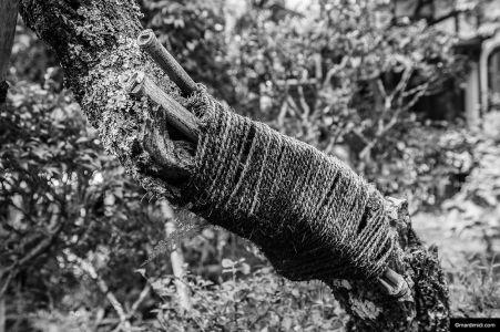Tree bondage